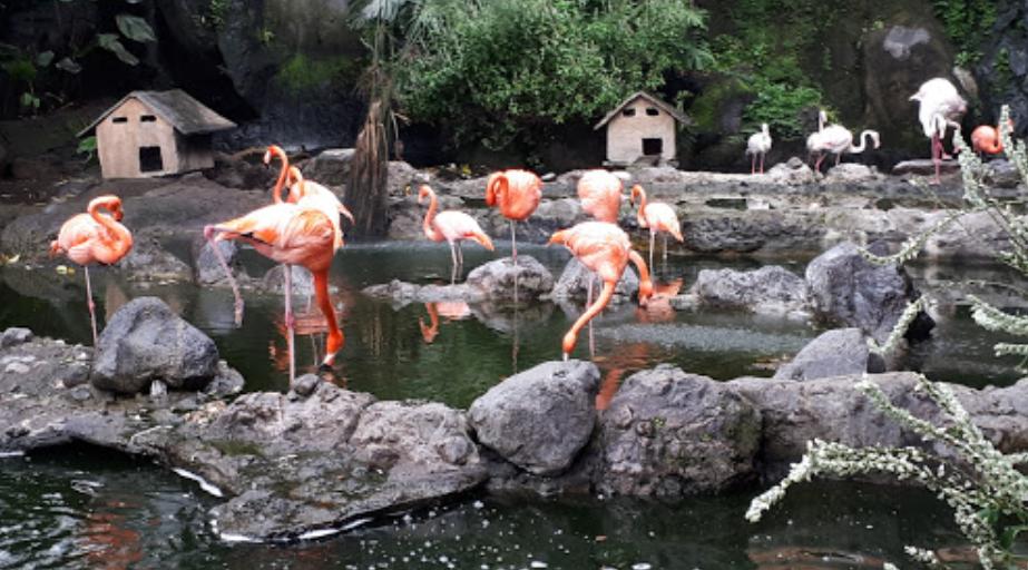 Tempat Wisata Keluarga di Malang: Belajar Mencintai Bumi di Ekowisata Eco Green Park (Jatim Park 2) 2